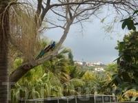 райские  птицы в земном раю