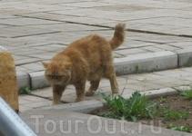 Николо-Косинский монастырь. Это не кот, как можно подумать, а кошка. Зовут: Хэлп Ми. Не шутка.