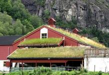 """Трава не только """"у дома"""", но и на нем"""
