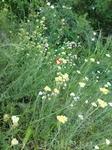 В горах мае очень красиво. Все цветет и воздух наполненным ароматом цветущих трав