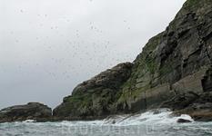 Птичьи острова в Йесвэрстаппане.