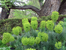 Как и было задумано изначально, сейчас сад занимает 4 террасы. В саду много аллей, которые носят имена его руководителей прошлых эпох.