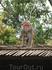 пойманной обезьяне отрубают лапу (((