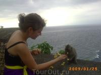 Храм на обрыве Улу Вату, где много много диких обезьян!