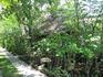 много зелени вокруг бунгало