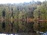 Где лес, а где озеро?