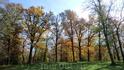 Позолотой покрыты деревья...