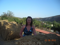 Сена на Кипре заготавливают очень много.