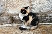 """Которские коты - одна из """"изюминок"""" города. Их здесь несметное количество, все ласковы и рады угощению."""