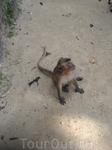 одна из самых больших и жирных обезьян потом начала выхватывать из рук моего друга целую связку бананов, обезян повис на руке - пришлось отдать)