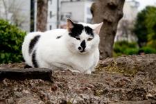 Кот в парке около Святой Софии
