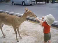 Зоопарк Као Кео, пакетик с овощами продается на входе в зоопарк