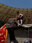 Сафарипарк. Можно покататься на слоне!!