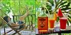 Жизнь хороша, когда пьешь на Боракае ромчик не спеша...
