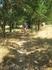 дорога к морю-аллея плодовых деревьев