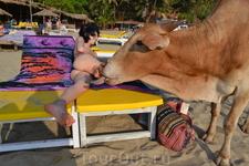 Фото 103 рассказа Индия. ГОА Арпора