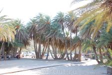 Пляж Ваи в пальмовой роще.