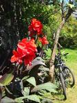Наши велосипеды, любезно (и бесплатно) предоставленные хозяевами нашего гостевого дома в С-В.Феррейре