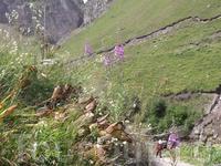 я даже не представляла как много цветов в горах , какое разнотравье!