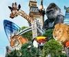 Фотография Лондонский зоопарк
