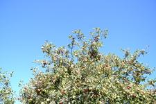 много фруктовых деревьев