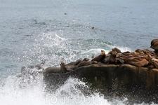 В океанских брызгах ...