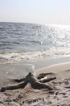 сделанный нами осьминожка на берегу =)