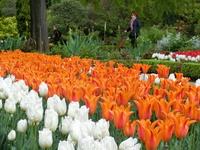 Новый ботанический сад постепенно прирастал новыми экземплярами растений, которые присылали из-за океана, а также привозили из экспедиций.