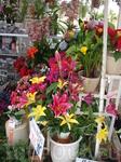 Цветочный сад Далата. Здесь можно купить различные растения и цветы