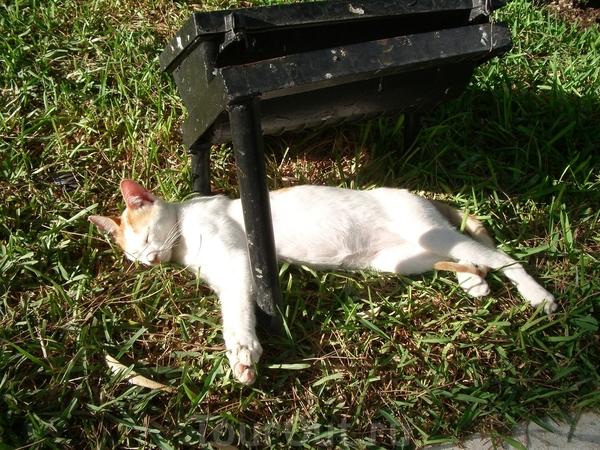 полуденный кошачий сон