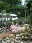 Большой раздел сада посвящен различным видам и сортам кактусов.