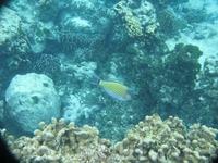 Кораллы, о. Тачай.