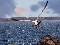 Пиранский залив не широкий. С набережной Пирана видна Хорватия