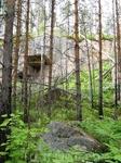 И снова лес на фоне скалы
