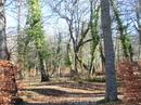Деревья в лесу, по которому идет дорожка, покрыты толстым слоем мха или обвиты ползучими растениями. Такое немного сказочное впечатление заповедного леса.