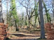 Деревья в лесу, по которому идет дорожка, покрыты толстым слоем мха или обвиты ползучими растениями. Такое немного сказочное впечатление заповедного леса ...