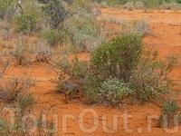 А это одна из самых маленьких антилоп в мире- Дик-Дик,весом 2-3 кило!