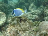 подводный мир Мальдив