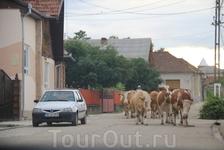 на трассе в Трансильвании