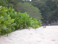 На пляже Симилан настоящий кайф и релакс...Такое ощущение что весь остров принадлежит только тебе.