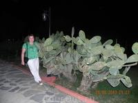 Заросли кактусов в мини-зоопарке. Бедный куст исписан весь надписями типа здесь был Коля на иностранных языках. Совсем не по -гринписовски