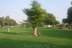 ОАЭ/Дубай Крик Парк. Местные  приезжают сюда большими сеьями и устраивают пикники на зеленых лужайках