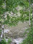 Березки у реки