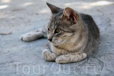 Славный кошак на земле Карфагена