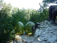 Яйца динозавра рядом с мамашей.Излишняя освещенность и солнечные блики испортили совместное фото