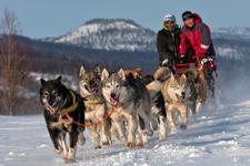 прогулки в собачьей упряжке
