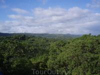 дождевой лес (канатная дорога)