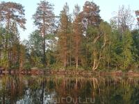 Остров на Гимольском озере