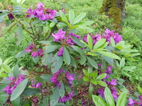 Удивительные цветы в Дзинтару межапарке