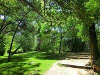 Зелень, зелень и еще раз зелень. Тишина и прохлада. Здесь гуляют влюбленные парочки и выгуливают своих питомцев мадридские собачники.